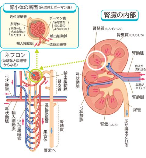 蛋白 精液 検査 尿